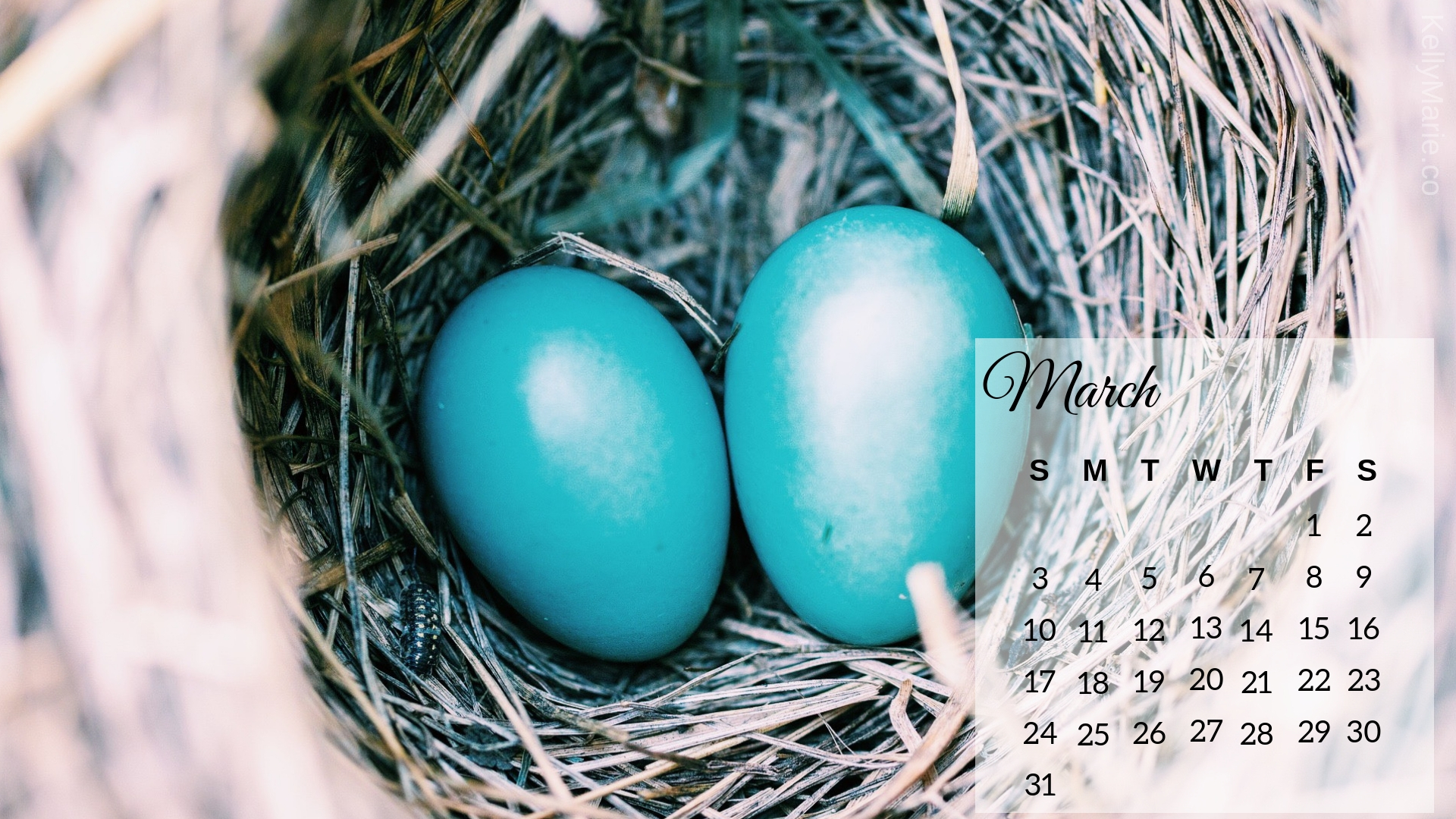 March 2019 Bird Eggs